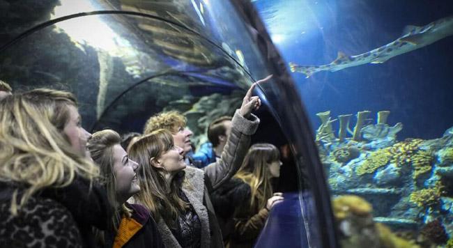 Bristol Aquarium - Bristol